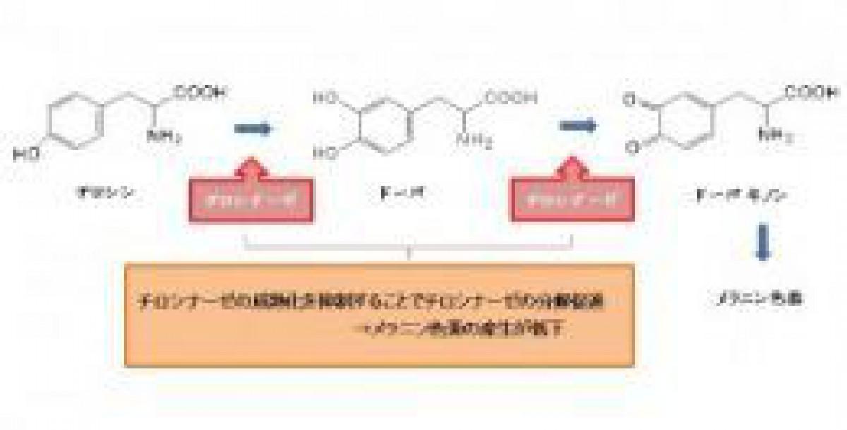 ⑨ナリス化粧品の会社研究 ~技術開発型企業として特許取得、シワ改善、美白等の研究開発に力~(下)